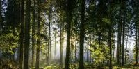 Glorious sunrise in idyllic forest glade green woodland nature panorama